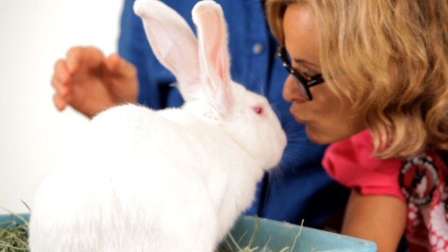 Are Rabbits Nocturnal? | Pet Rabbits