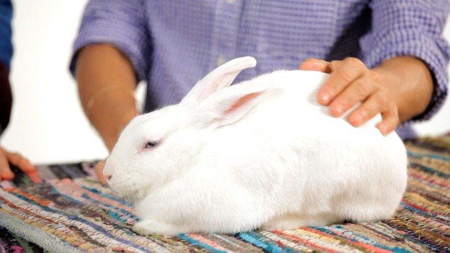 Can I Leave My Rabbit Alone for Weekend? | Pet Rabbits