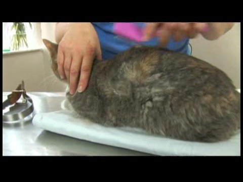 Cat Grooming Tips : Cat Grooming: Shedding