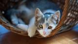 Cat Supplies Needed | Cat Care