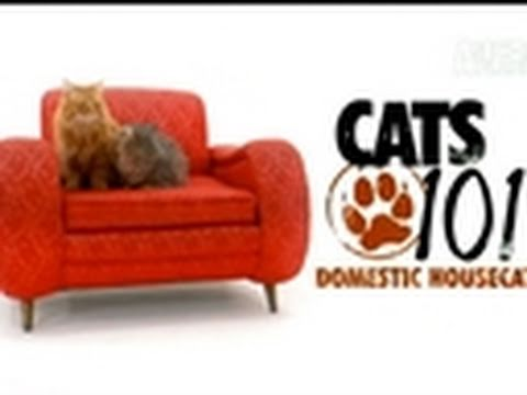 Cats 101: Domestic Housecat
