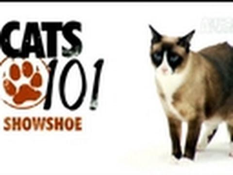 Cats 101: Snowshoe