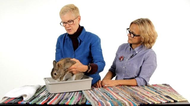 Do Rabbits Need to Be Bathed?   Pet Rabbits