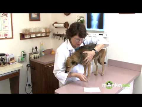 Dog Care – Checking for Fleas