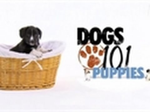 Dogs 101 – First Four Weeks | Puppies