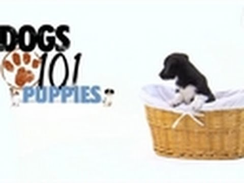 Dogs 101 – Puppy Training | Puppies