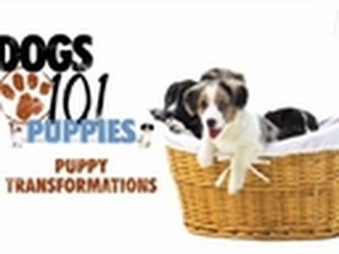 Dogs 101 – Puppy Transformations | Puppies