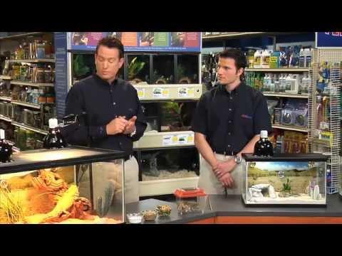 Feeding a Reptile – PetSmart
