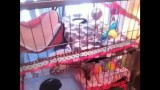 Ferret Cage (Mansion) Tour