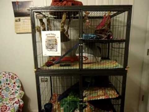 Ferret Nation Cage Tour