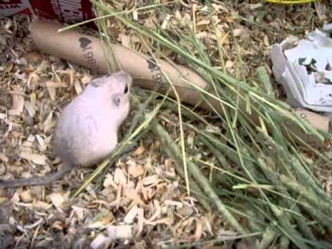 Gerbil Care: Daily Routine
