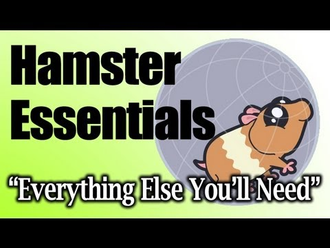 "HAMSTER CARE – Essentials, ""Everything Else You Will Need"" 2/2"