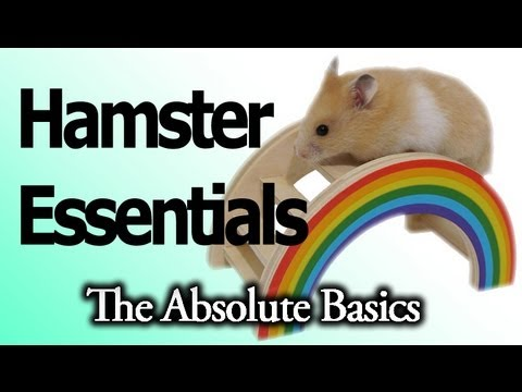 HAMSTER CARE! – Essentials, The Absolute Basics 1/2