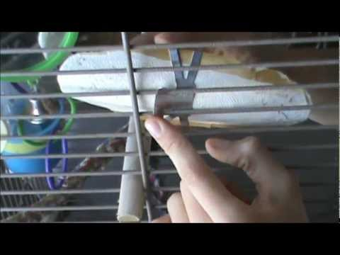 How to Attach a Cuttlebone to a Bird Cage