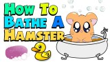 HOW TO BATHE A HAMSTER!