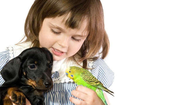 How to Bring a Bird into Home with Pets | Pet Bird