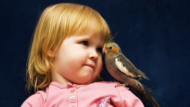 How to Bring a Bird into Home with Baby | Pet Bird