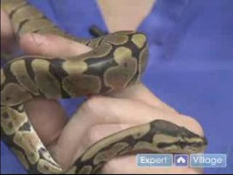 How to Care for a Pet Snake : Snakes Not Recommended as Pets