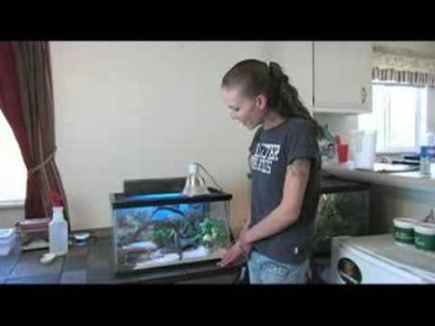 How to Care for Leopard Geckos : Leopard Gecko Temperature Range