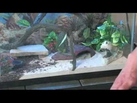 How to Care for Leopard Geckos : Leopard Gecko Diet