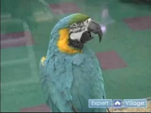 How to Choose a Pet Bird : Measure a Bird's Lifespan & Noise Level