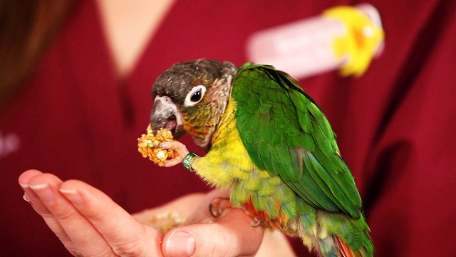 How to Feed a Bird | Pet Bird