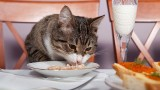 How to Feed Your Cat | Cat Care