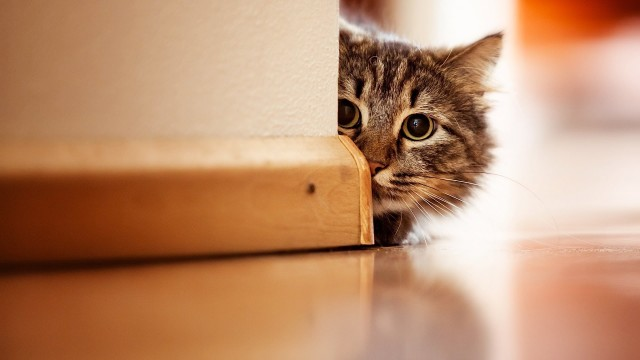 How to Keep Cat from Night Mischief   Cat Care