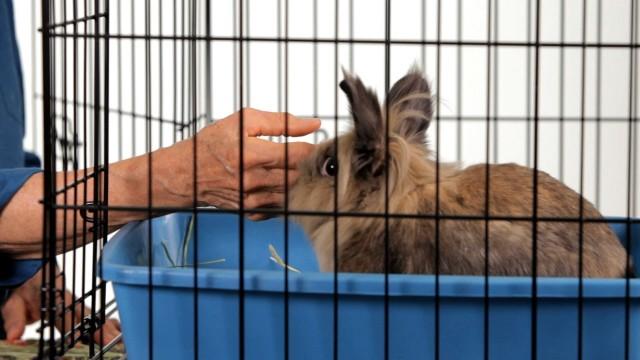 How to Make a Rabbit Less Aggressive | Pet Rabbits