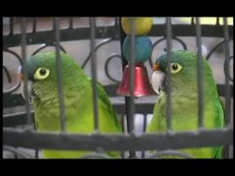 How to Pick Family Pets : Why to Choose Birds for Your Family Pet