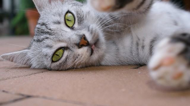 How to Play with Your Cat | Cat Care