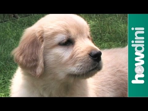 How to potty train a puppy – Housebreaking your dog