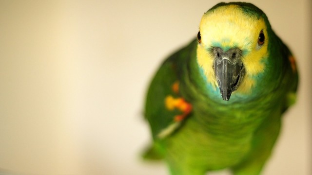 How to Prepare for a Bird | Pet Bird