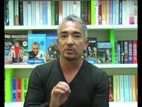 How to Raise the Perfect Dog – Cesar Millan