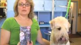 How to Remove Fleas from Dogs – Dog Grooming Tips
