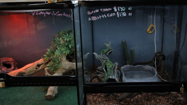How to Set Up a Snake Aquarium | Pet Snakes
