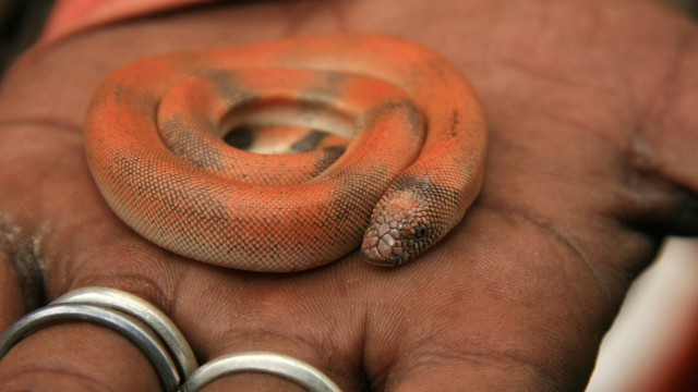 How to Take Care of a Baby Snake | Pet Snakes