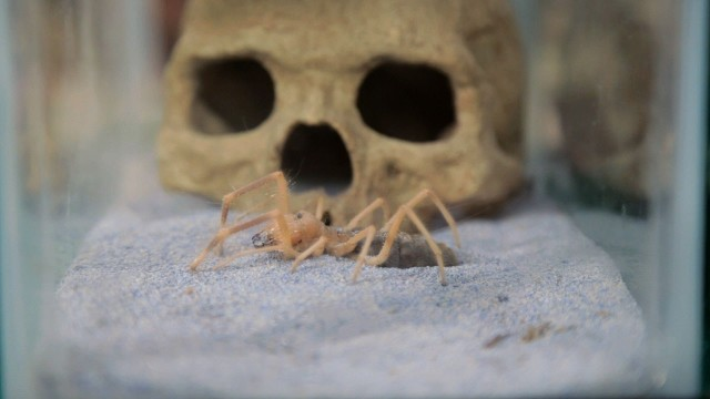 How to Take Care of a Pet Scorpion | Pet Tarantulas