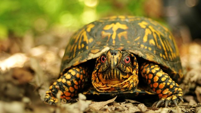 Is It Legal to Own a Pet Turtle? | Pet Turtles