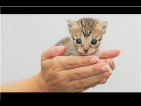 Kitten Care : How to Hold Newborn Kittens