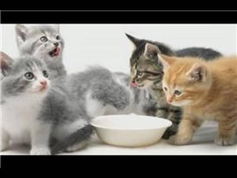 Kitten Care : Kitten Care Tips