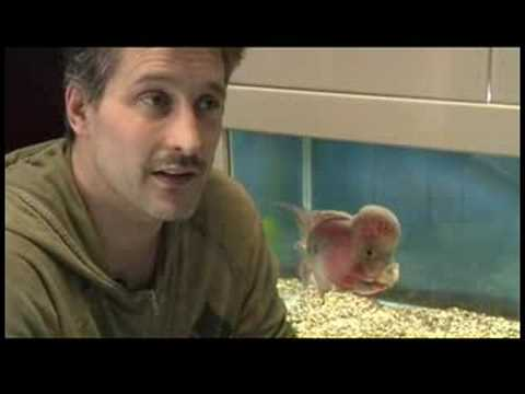 Pet Fish & Aquarium Care Tips : How to Choose Fish for a Freshwater Aquarium