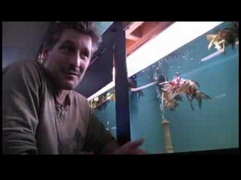 Pet Fish & Aquarium Care Tips : How to Name a Goldfish