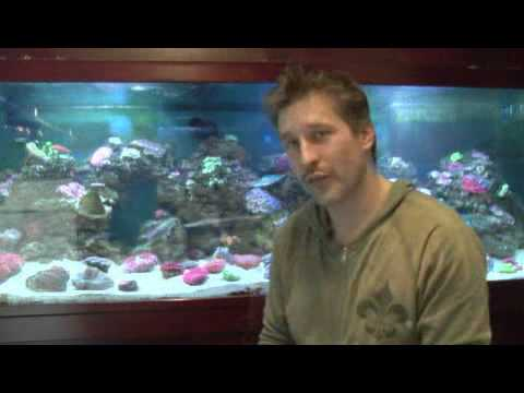 Pet Fish & Aquarium Care Tips : How to Keep Your Fish From Getting Stressed