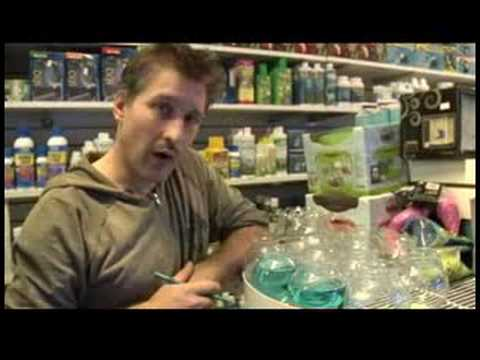 Pet Fish & Aquarium Care Tips : How to Keep a Betta Fish