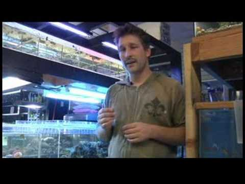 Pet Fish & Aquarium Care Tips : How to Care for Betta Fish