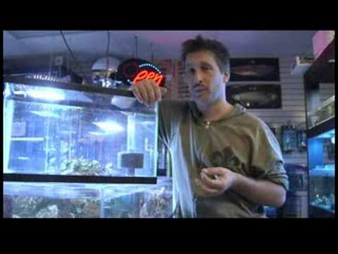 Pet Fish & Aquarium Care Tips : How to Breed Livebearing Tropical Fish