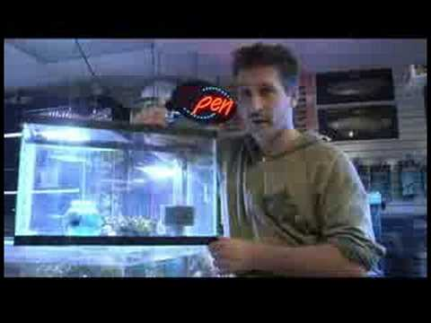 Pet Fish & Aquarium Care Tips : How to Breed Betta Fish