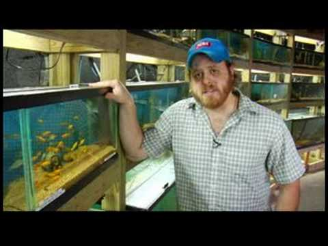 Pet Fish Care : Aquarium Supplies