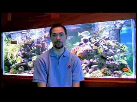 Pet Fish Care : Beginner Saltwater Aquarium Setup